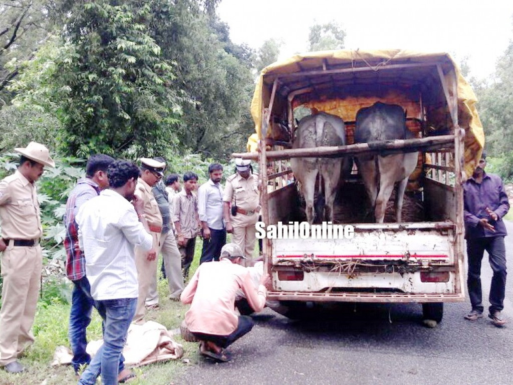 Bhatkal police seizes pick up truck with buffaloes