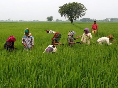 Cong farmers wing writes to party leaders owning sugar mills