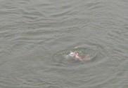 بنگلورو کا بھگت دھرمستھل میں ڈوب کر ہلاک