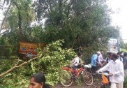 Heavy tree falls on lorry,bus; lucky escape for passengers