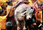As TN conducts Jallikattu, 2 die during sport, 1 in protests