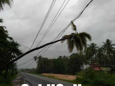 Coconut tree falls on electric wire in Byndoor