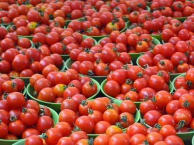 ٹماٹراور''سرخ رو''،دہلی میں 100 روپئے کلو