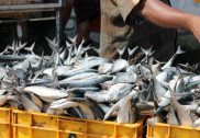 Today they banned cattle slaughter, tomorrow fish: Kerala CM
