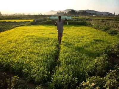 موسلادھار بارش نے کسانوں کے چہروں پر خوشی بکھیر دی