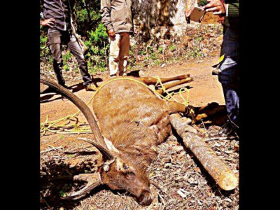 Man held for killing deer in Mundgod