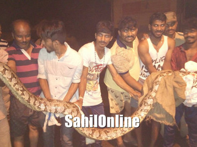 Karwar: Around 11 ft long Python caught by locals