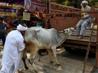 States must compensate victims of cow vigilantism: SC