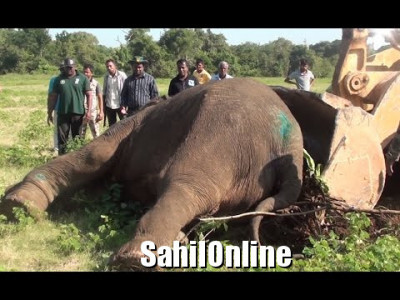 Yellapur: Villagers blame forest officials' apathy for sick jumbo's death