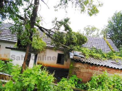 یلاپور میں موسلا دھار بارش کے دوران اسکول پر درخت گر پڑا