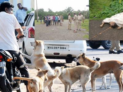 آوارہ کتوں کے حملے میں ایک شخص کی موت؛ کاروار میں پیش آیا واقعہ