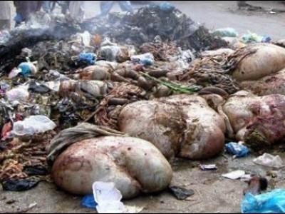 بھٹکل میں قربانی کے جانوروں کی ہڈیوں اور اوجھڑی کو لے جانے کی تنظیم نے پھر سونپی الہلال اسوسی ایشن کو ذمہ داری؛ فیڈریشن نے بھی کی عوام سے تعائون کی اپیل