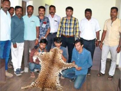یلاپور میں چیتے کے چمڑوں کی سپلائی کرنے والے 3 ملزم گرفتار