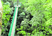 Minister Ramanath Rai to inaugurate Kuveshi canopy walk on Feb 18 in Dandeli