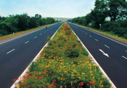 Flower bearing boulevard over medians to greet travellers