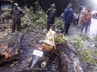 یلاپور میں چلتی بائک پر درخت گرپڑا؛ بائک پر سوار دولوگوں کی موقع پر موت