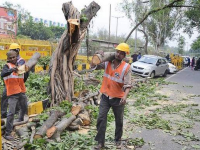 دہلی ہائی کورٹ نے جنوبی دہلی میں درختوں کے کاٹنے پر روک لگائی