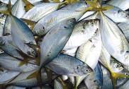 کیرالہ میں 6,000 کلو زہریلی مچھلی ضبط