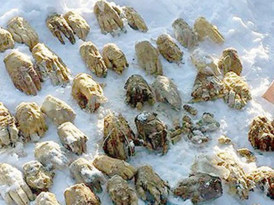 سائبیریا میں ایک تھیلے سے 54 انسانی ہاتھ برآمد