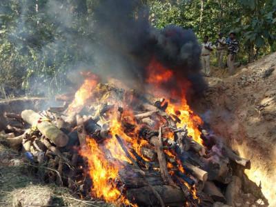 جوئیڈا میں پالتو ہاتھی پر جنگلی ہاتھیوں کا حملہ؛پالتو ہاتھی ہلاک