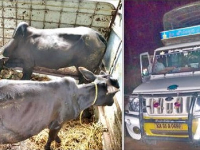 یلاپور میں جانور سپلائی کے الزام میں سواری سمیت جانور ضبط :2گرفتار