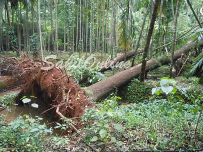 ہوناور: ہیسکام کے افسران راستہ بھٹک گئے۔ پوری رات جنگل میں گزارنے پر ہوئے مجبور