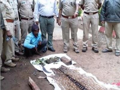 ڈانڈیلی کے جنگلات میں ہرن کاشکار اور چمڑا فروخت کرنےو الا ایک ملزم گرفتار : تین فرار