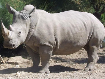 102 one-horned rhinos killed since 2008, 209 poachers arrested: RTI reply