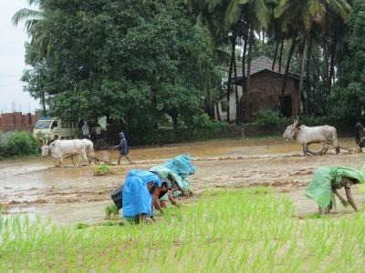جانوروں پر حکومت کی مہربانی۔اب دوپہر 12تا3بجے کے دوران رہے گی کھیتی باڑی کی مشقت پر پابندی