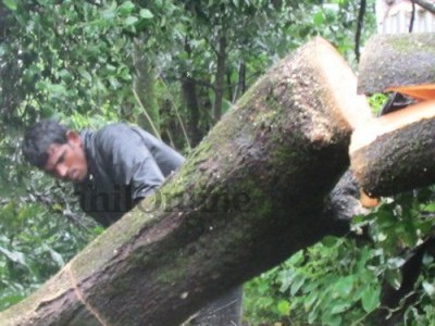 Uprooted tree blocks NH 73 between Mangaluru-Chikamagaluru