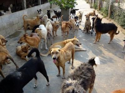 بنگلورو میں آوارہ کتوں نے پانچ سالہ بچے کو نوچ کھایا۔ اسپتال پہنچنے سے قبل بچے نے دم توڑ دیا