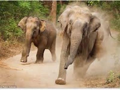 اترکنڑا میں ہاتھیوں کے حملے سے کسانوں کی فصل برباد؛ ارکان اسمبلی کی خاموشی پر اسپیکر کاگیری کو خود کرنا پڑا متوجہ