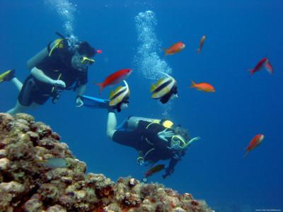 Scuba Diving Fest at Netrani Island in Murdeshwar on February 29