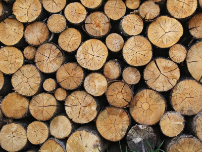 Hidden Teak Wood Logs Seized In Mundgod Sahilonline