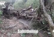 مینگلورکے قریب اُلال میں آٹو رکشہ پر درخت گرگیا؛ آٹو پر سوار چھ لوگ بال بال محفوظ؛ آٹو کو نقصان