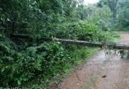 دو دنوں کے وقفے کے بعد بھٹکل میں پھر زبردست بارش؛ راستے تالاب میں تبدیل؛ درختوں کے گرنے سے مزید کئی مکانوں کو نقصان؛ 18 الیکٹرک کھمبے گرنے سے دو لاکھ کا نقصان