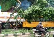 منگلورومیں اسکول بس پر گرا بہت بڑا درخت۔17اسکولی بچے بال بال بچ گئے!