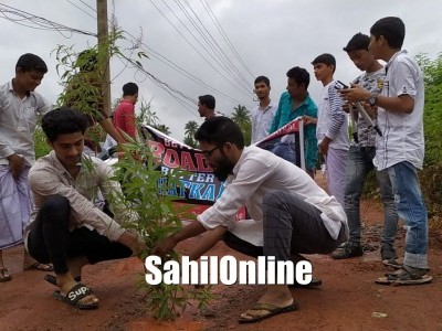 Bhatkal: Chowtani residents plants trees in potholes to protest against the worsening conditions of road
