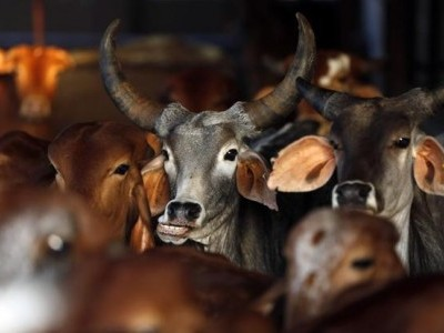 Police-cattle traffickers nexus busted, 2 cops arrested
