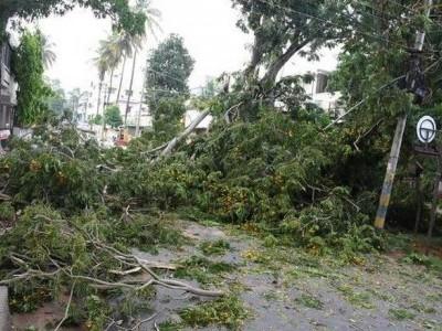 میسورو میں تیز بارش کی تباہ کاریاں، کئی درخت اکھڑ گئے