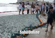 Thousands of fishes caught on the coast of Kumta, Murdeshwar; no fair prices, fishermen left disappointed