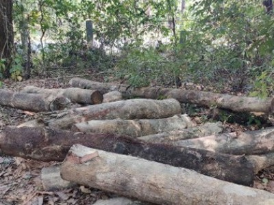 Udupi: Forest officials seized 87 logs