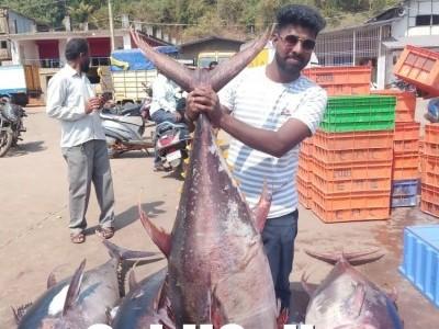 ಕಾರವಾರ: ಮೀನುಗಾರರ ಬಲೆಗೆ ಬಿತ್ತು ಮೂರು ಜಾತಿಯ ಅಪರೂಪದ ಮೀನು