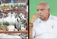 کرناٹک میں عید الاضحیٰ سے قبل پھر چھیڑا گیا گئو کشی کا معاملہ؛ وزیر اقلیتی امور، حج و اوقاف ہی نے اُٹھایا معاملہ