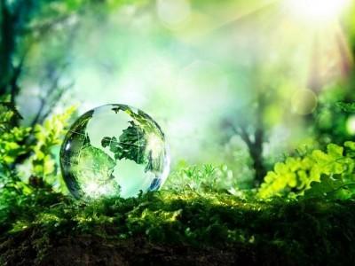 عالمی یومِ ماحولیات: شہروں میں جنگلات کے علاقے کو بڑھانے کے لیے 'نگروَن' اسکیم کی شروعات