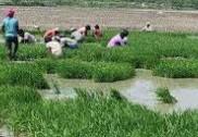 ಕಾರವಾರ: ಕನಿಷ್ಠ ಬೆಂಬಲಬೆಲೆ ಯೋಜನೆಯಡಿ ಭತ್ತ ಮಾರಾಟ: ನ.30 ರಿಂದ ಡಿ. 30ರವರೆಗೆ ಆನ್ಲೈನ್ ಮೂಲಕ ನೋಂದಣಿ