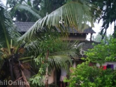 بھٹکل میں موسلادھار بارش کا سلسلہ جاری؛ ندی اور نالے اُبلنے کے قریب، کائیکنی میں مکان پر گرگیا ناریل کا درخت