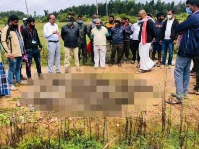 کرناٹک کے ہاسن میں   38 بندروں کی ہلاکت کے سلسلہ میں 7 افراد گرفتار