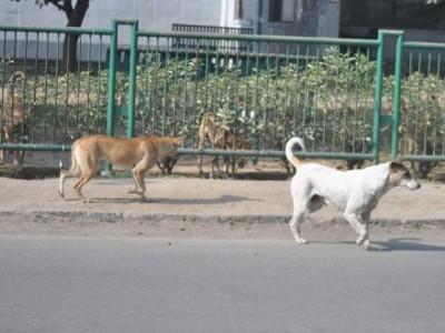 اب جانوروں میں پھیلا ایک نیا وائرس، کانپور میں 8 کتوں کی موت