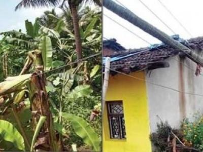 منڈگوڈ  میں موسلا دھار بارش : فصل ، بجلی کے کھمبے  اور موز کے باغات  وغیرہ کو شدید نقصان